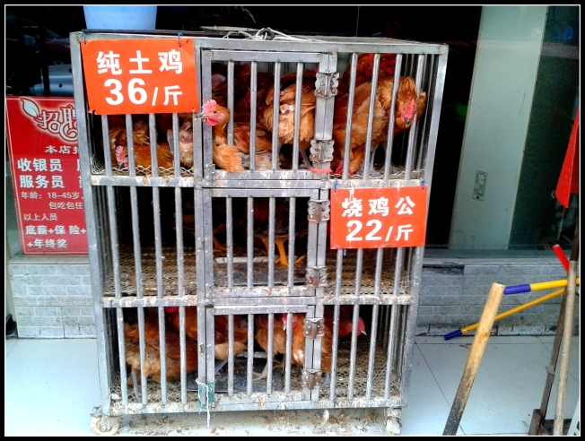Caged, live chickens in front of a local hotpot restaurant